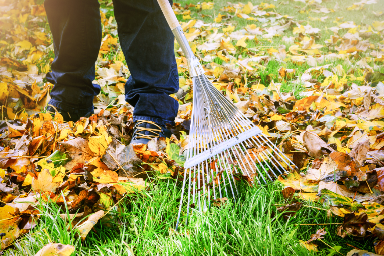 Man raking the fallen leaves