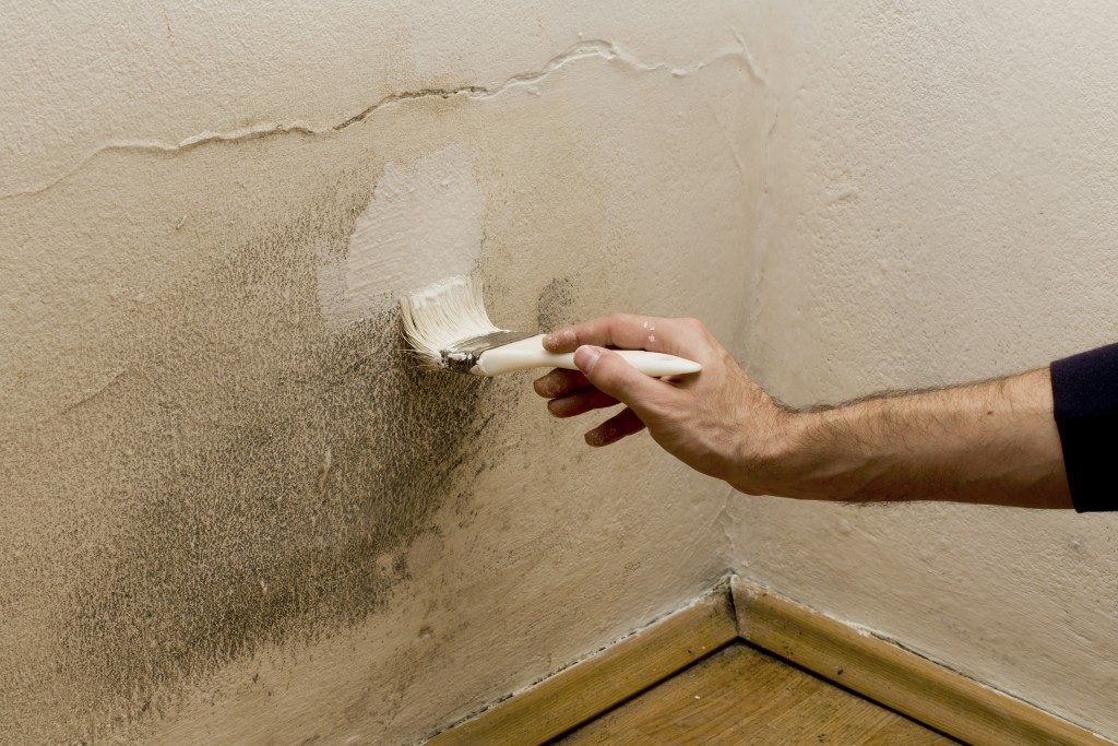 painting wall with mold