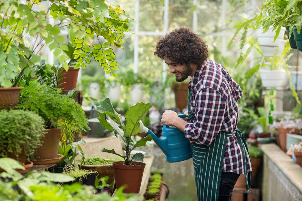 watering plants in the greenhouse