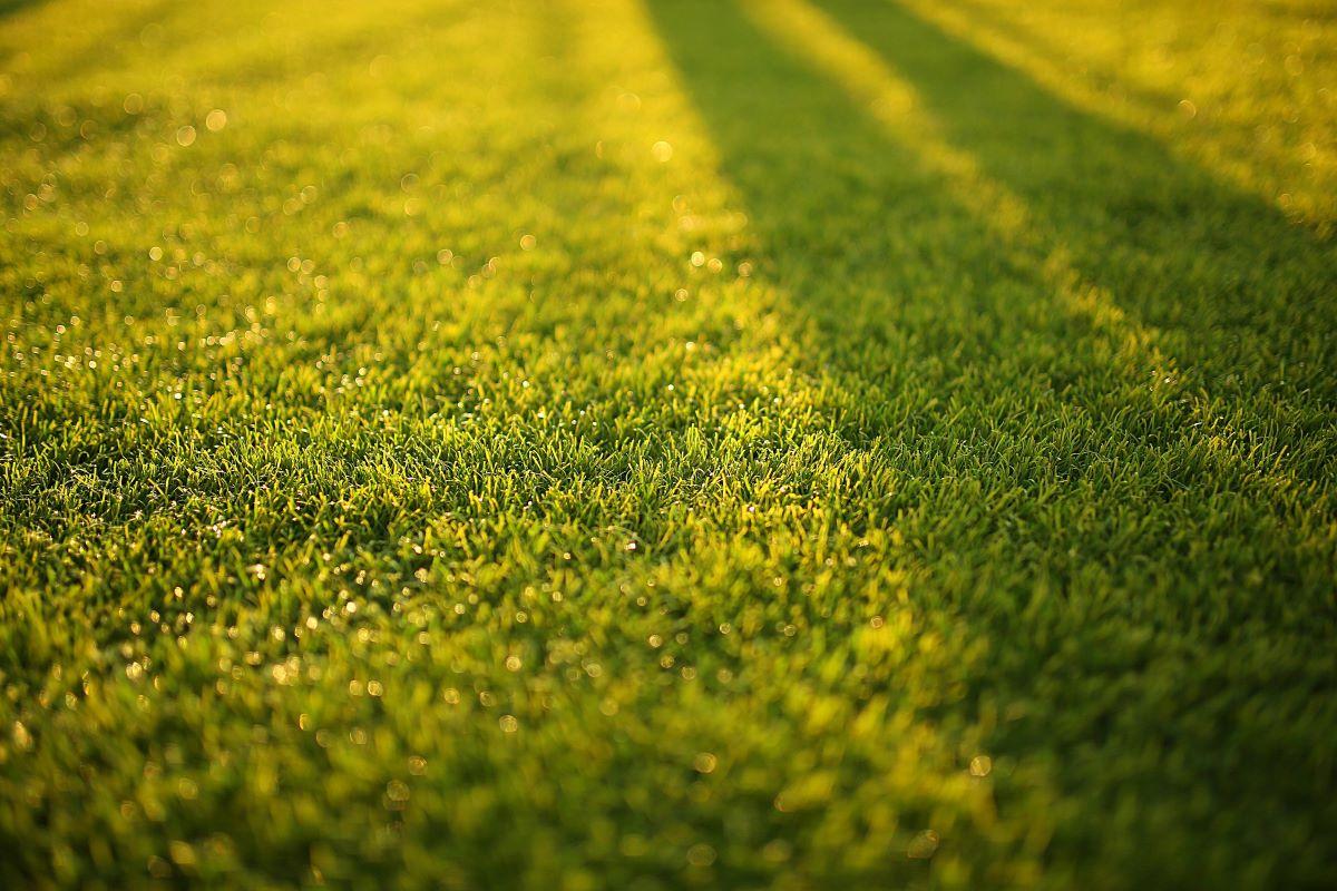 lawn front yard